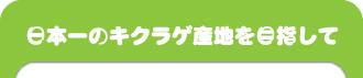日本一のキクラゲ産地を目指して